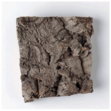 Small Cork Bark- R8046