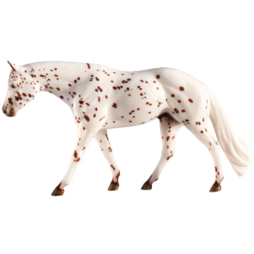 L'il Ricky Rocker, Appaloosa Champion