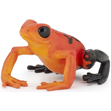 Equatorial Red Frog
