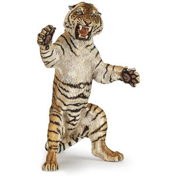 Sumatran Tiger, Standing