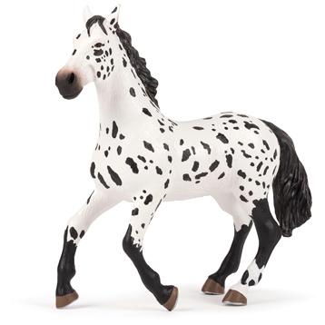 Large Appaloosa Horse