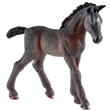 Lipizzaner Foal