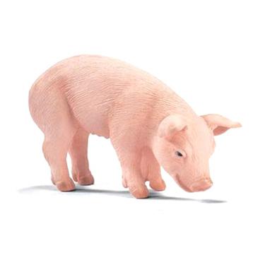 Piglet Eating