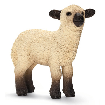 Shropshire Lamb